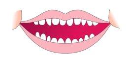 Primeros dientes del bebe 20 a 30 meses