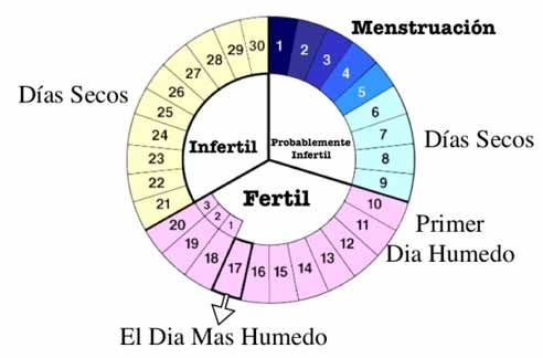 Calculadora de días fértiles de una mujer irregular